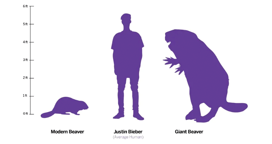 Scientists Discover Why The Prehistoric Giant Beaver Castoroides Went Extinct