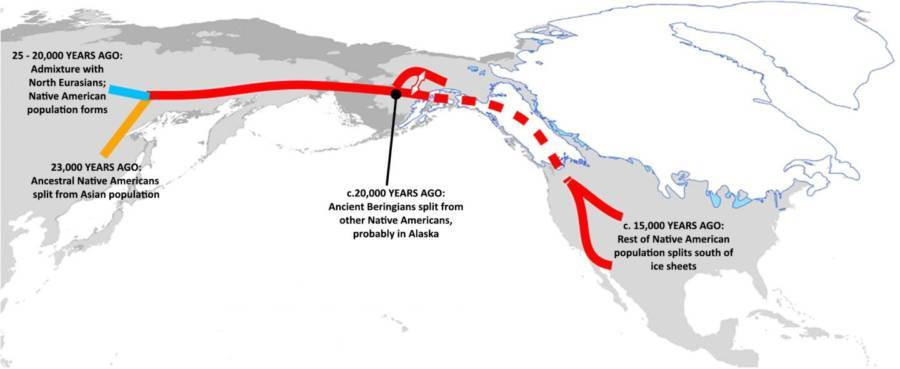Bering Strait Migration Pattern