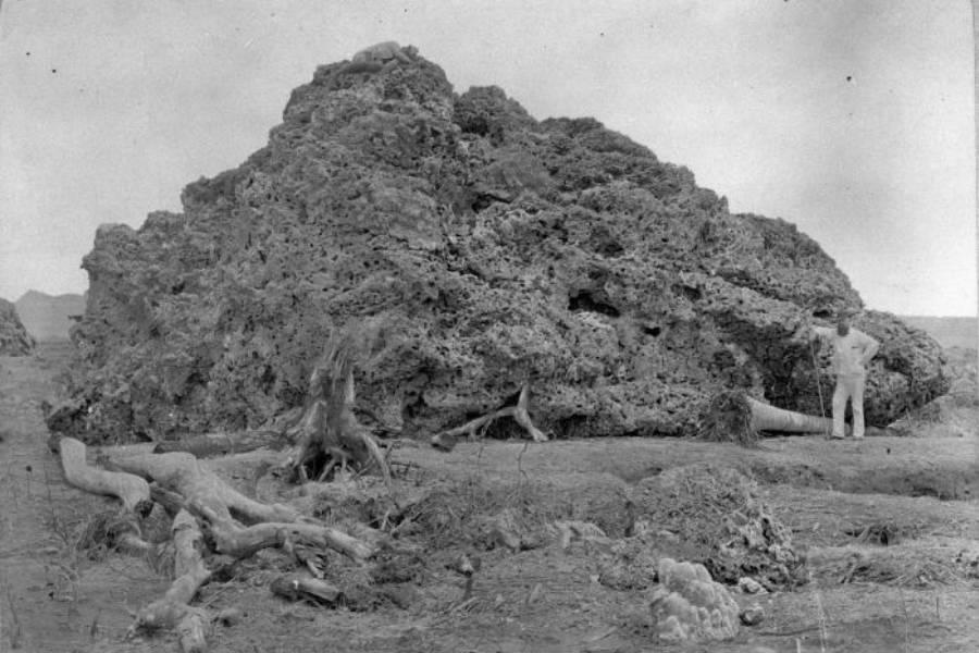 Giant Coral Debris