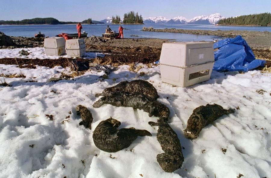 Dead Otter Family Exxon
