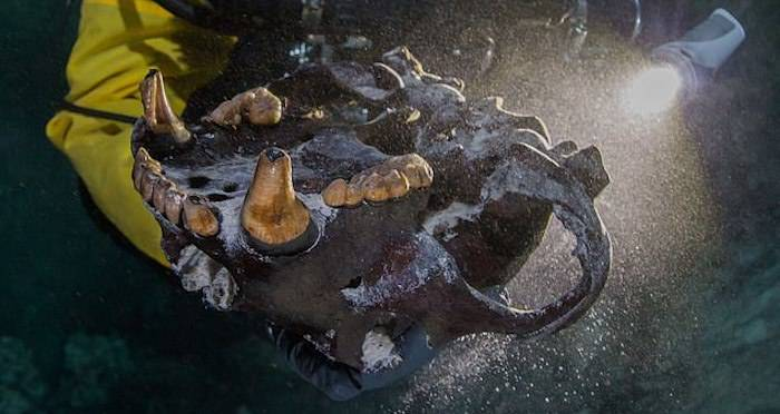 Ice Age Fossils Of Bear And Wolf-Like Species Found In ...