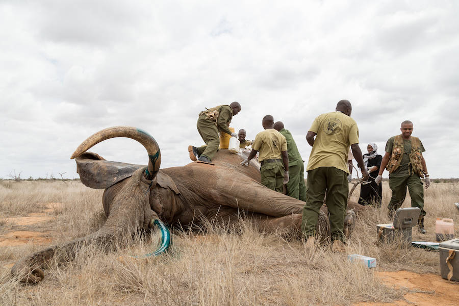 Elephant Killed In Africa