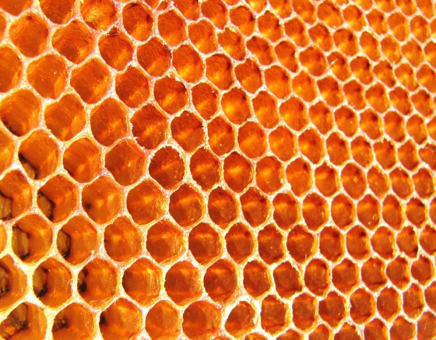 Honeycomb Trypophobia Trigger