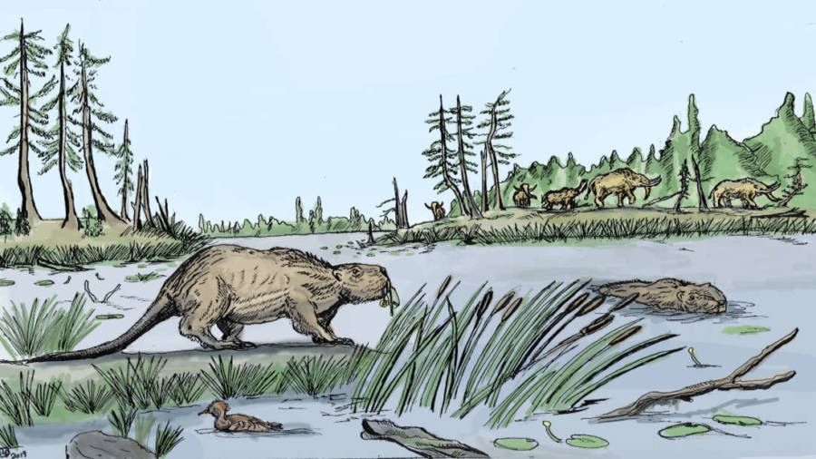 Illustration Of Castoroides Giant Beaver