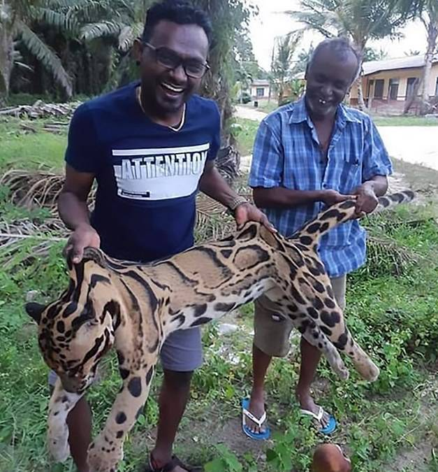 Malaysian Poachers Laughing