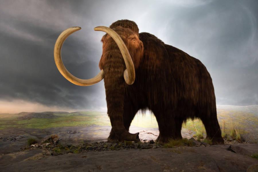 Mastodon At Victoria Museum