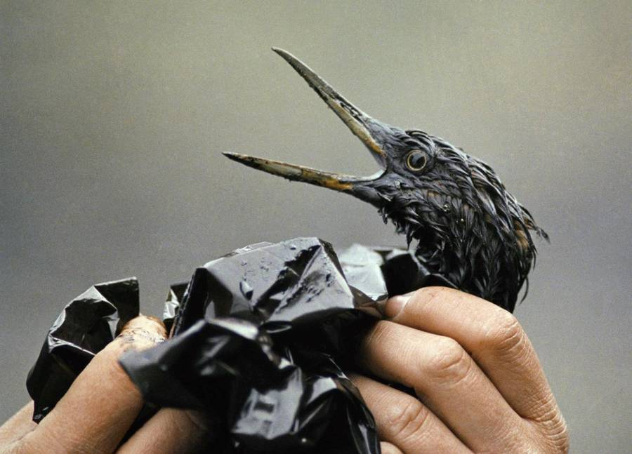 Oil Bird Exxon