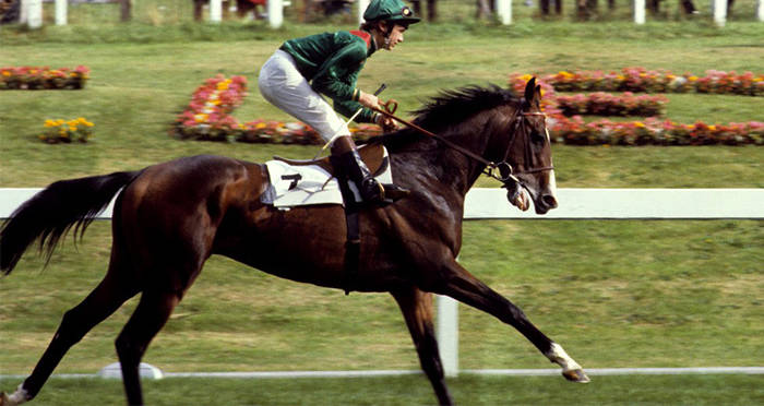 Shergar The Wonder Horse Whose Kidnapping Shocked The World