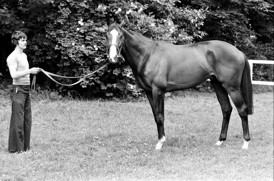 Shergar Stands Outside Stables