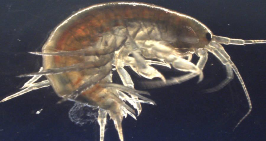 Shrimp Contaminated With Cocaine
