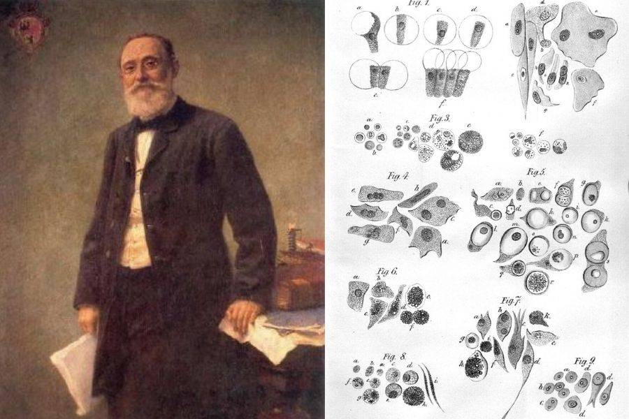 Painting Of Scholar Beside Sketches Of Cells