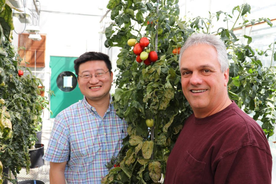 Zhangjun Fei And James Giovanni With Tomatoes