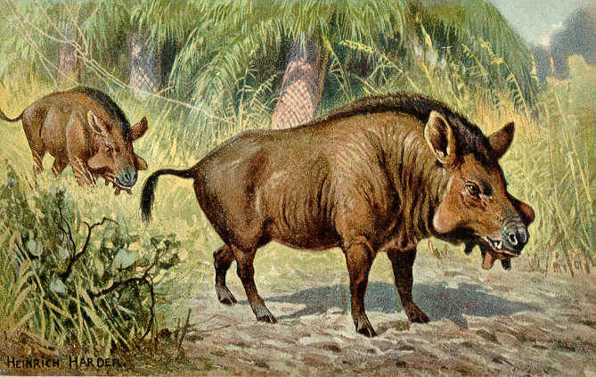 Illustration Of Daeodon