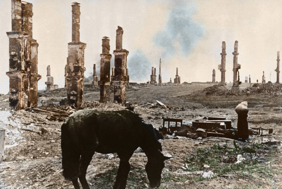 A Horse Grazes Around Ruins Of War