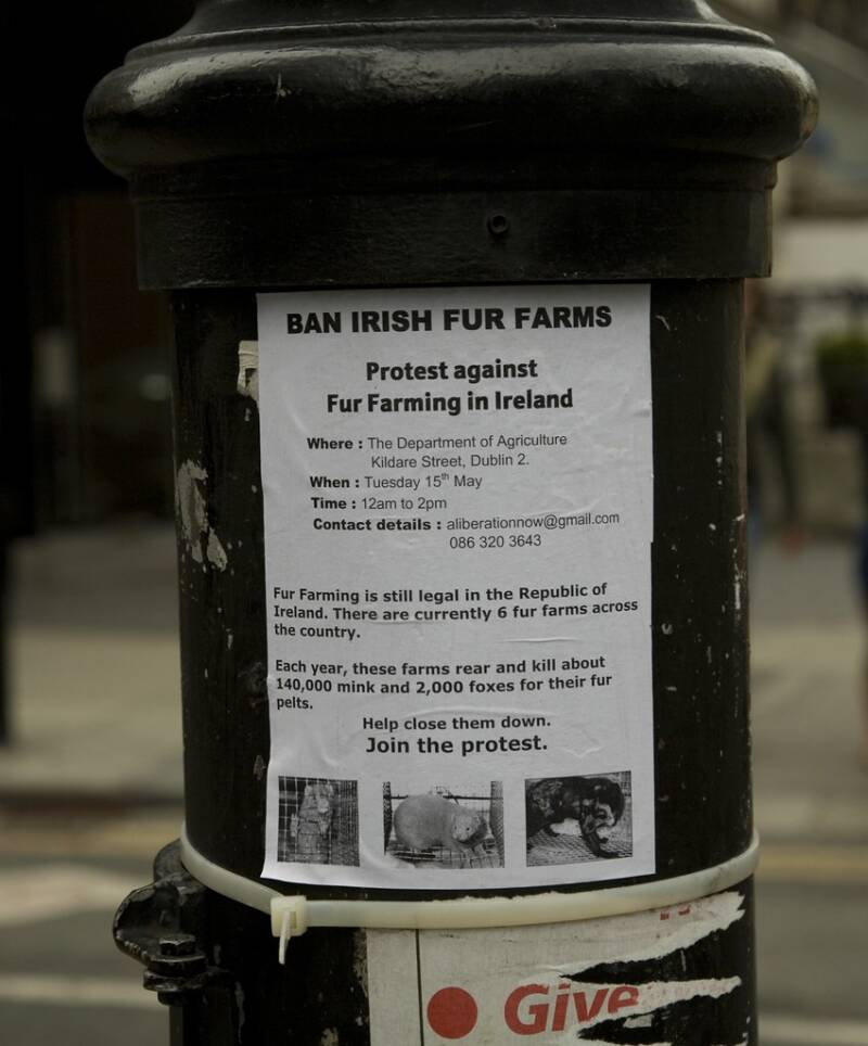 Ban Irish Fur Farms Flyer