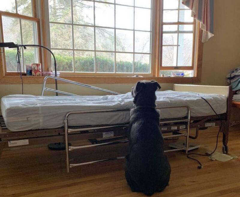 Loyal Dog Waits At Bedside