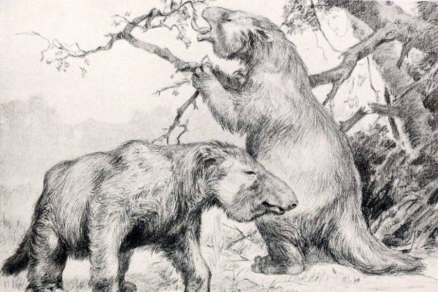 Illustration Of Two Megatherium