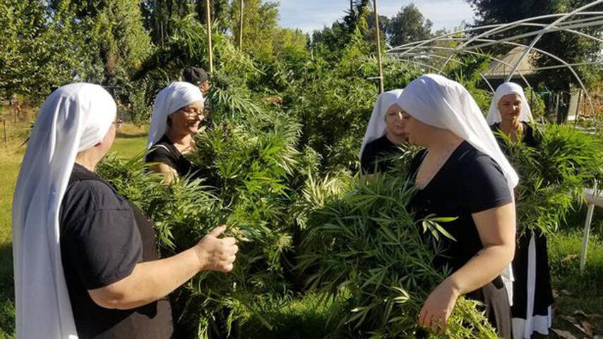 Nuns In Habits Farm Weed