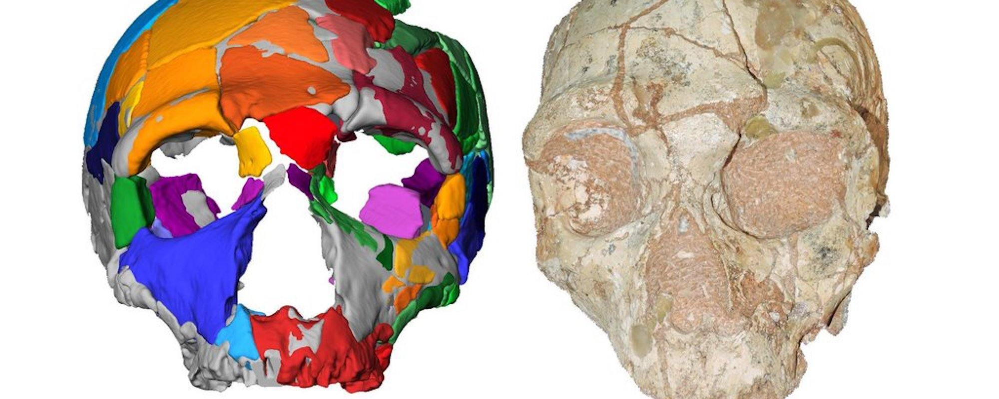 Neanderthal Skull And Virtual Model Featured