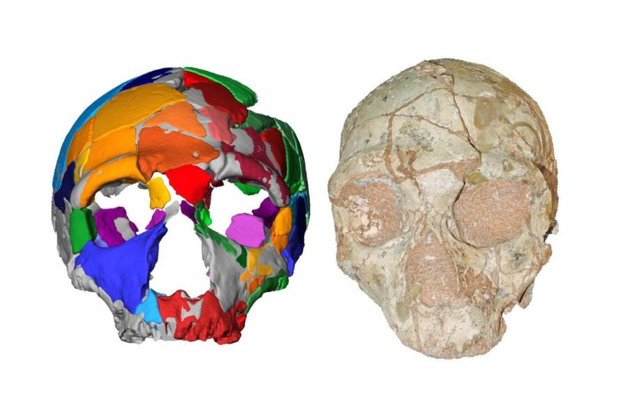 Neanderthal Skull And Virtual Model