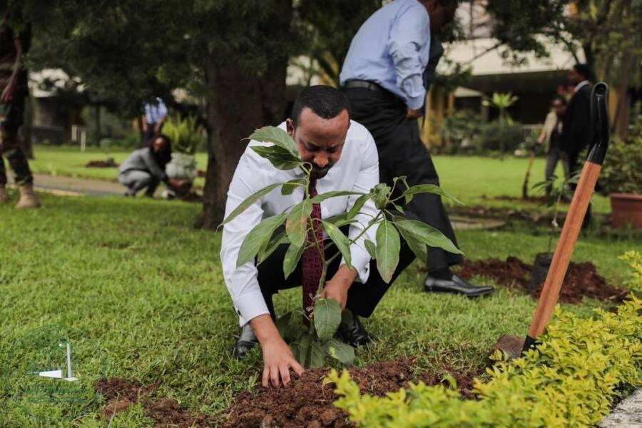 Abiy Ahmed Planting Trees