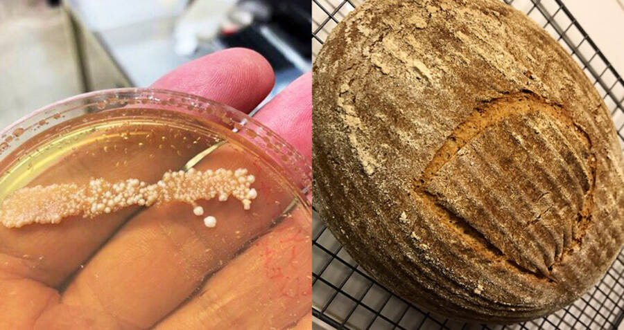 Ancient Yeast And A Loaf Of Bread