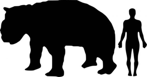 Comparing Diprotodon ToA  Human