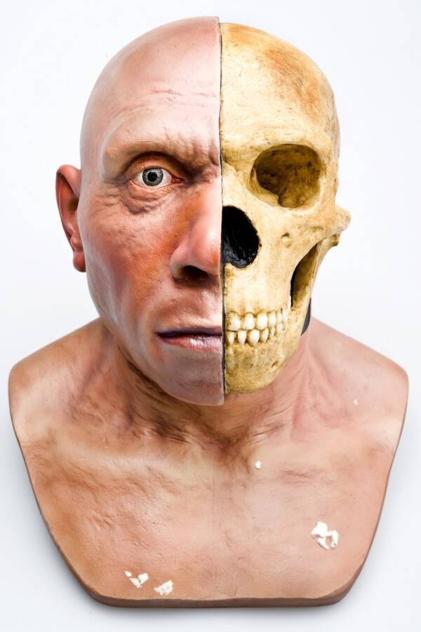 Reconstruction Of Neanderthal Head And Face