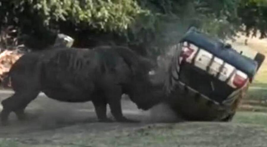 Rhino Attacking Car