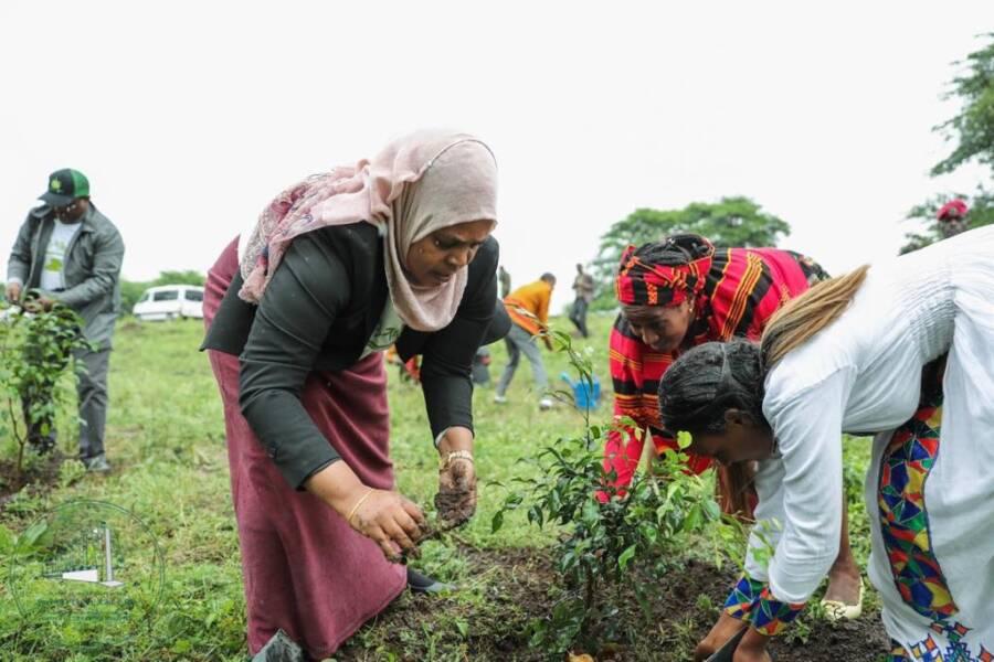 Ethiopian Women Planting Trees