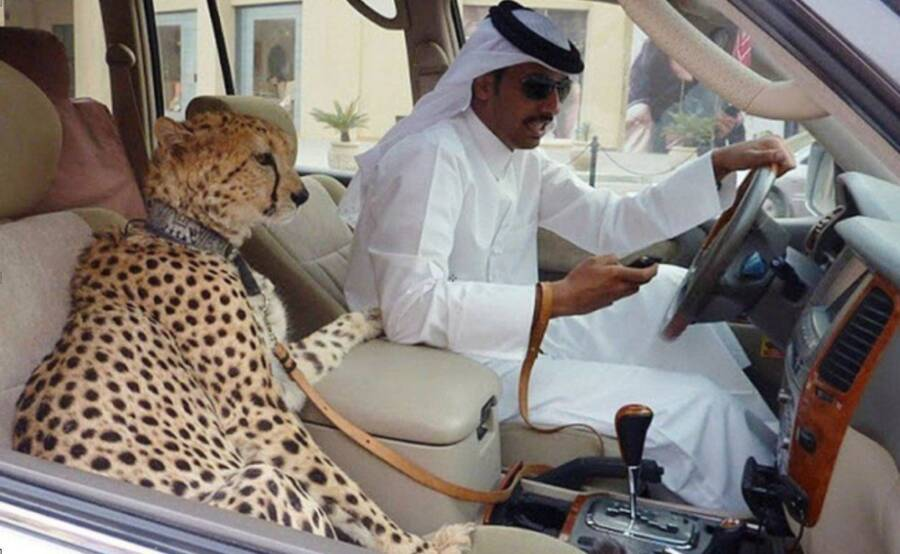 Car With Pet Cheetah