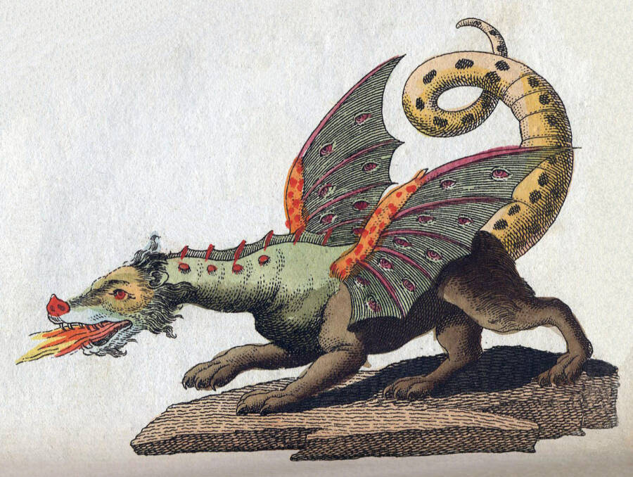 Dragon Drawing By Friedrich Johann Justin Bertuch