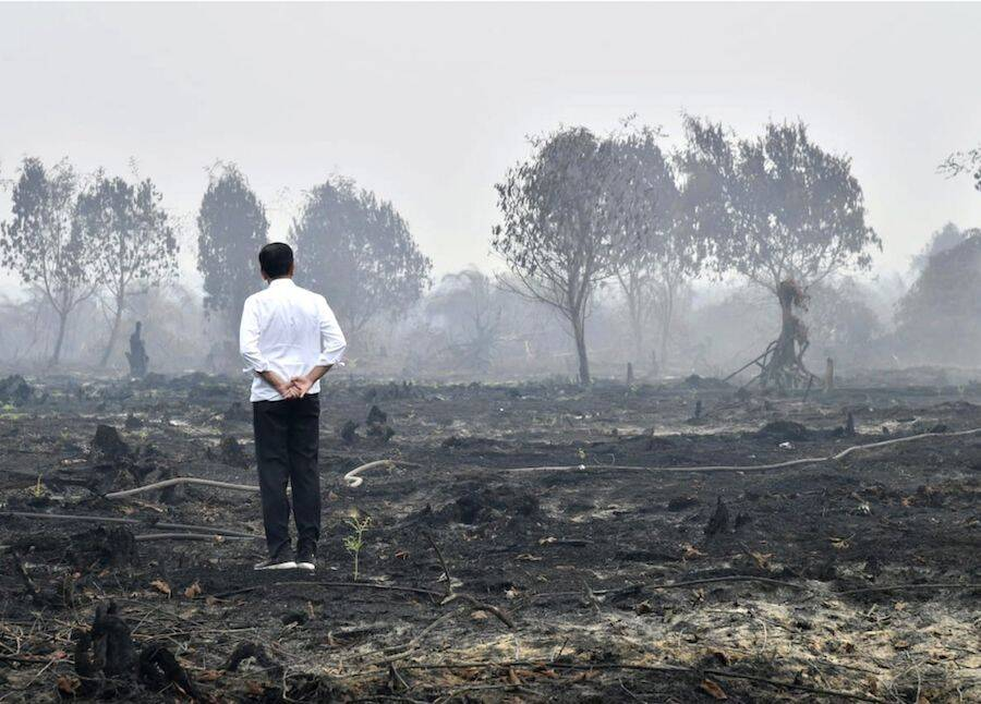 Jokowi Inspects Forest Fire Aftermath