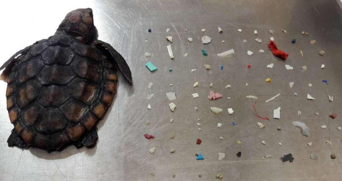 dead-sea-turtle-and-plastic-pieces-featured.jpg