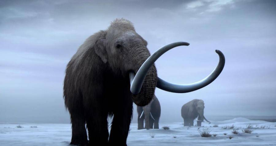 woolly-mammoths-roaming-the-tundra.jpg