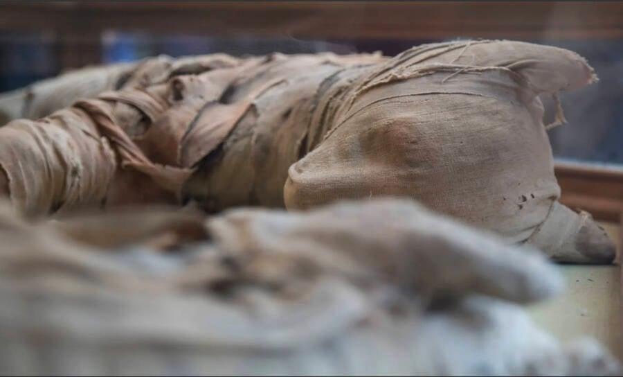 Ancient Mummified Lion From Saqqara