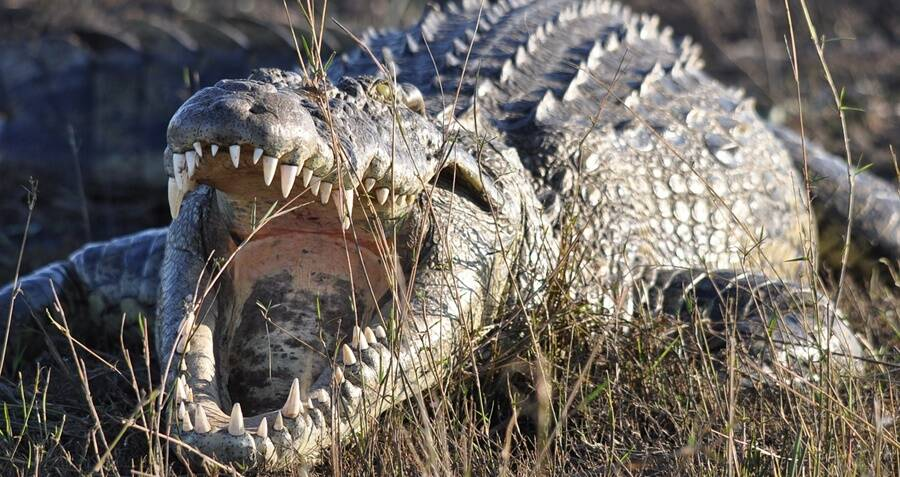 11-Year-Old Girl Wrestles With Deadly Crocodile To Save Her 9-Year-Old Friend