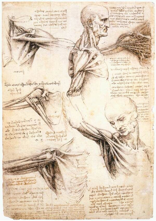 DaVinci's Drawings Of Corpses