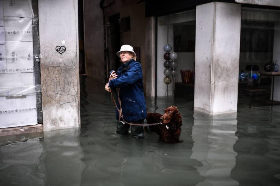 Dog In Venice Flood