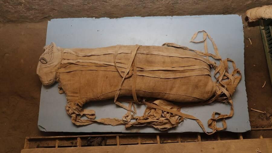 Ancient Egyptian Wildcat Mummy