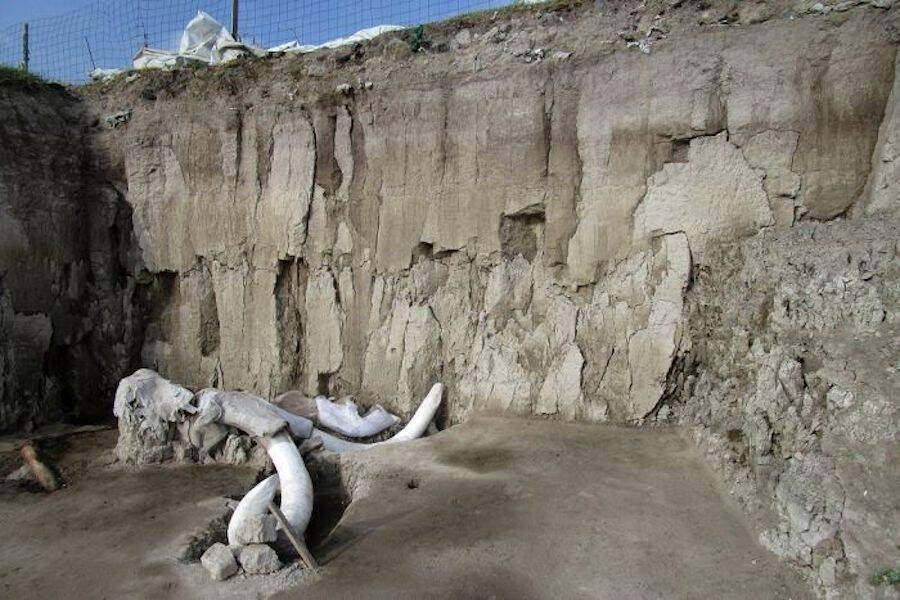 Mammoth Pit And Skeleton