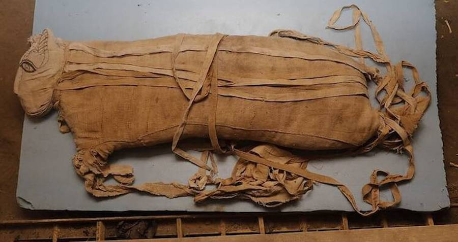 Rare Discovery Of Mummified Lion Cubs, Cobras, And Crocodiles Unveiled In Egypt