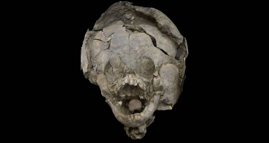Skull And Helmet Remains