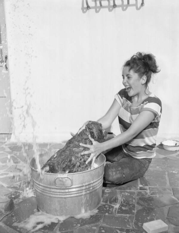 Elizabeth Taylor Washing Her Pet Dog