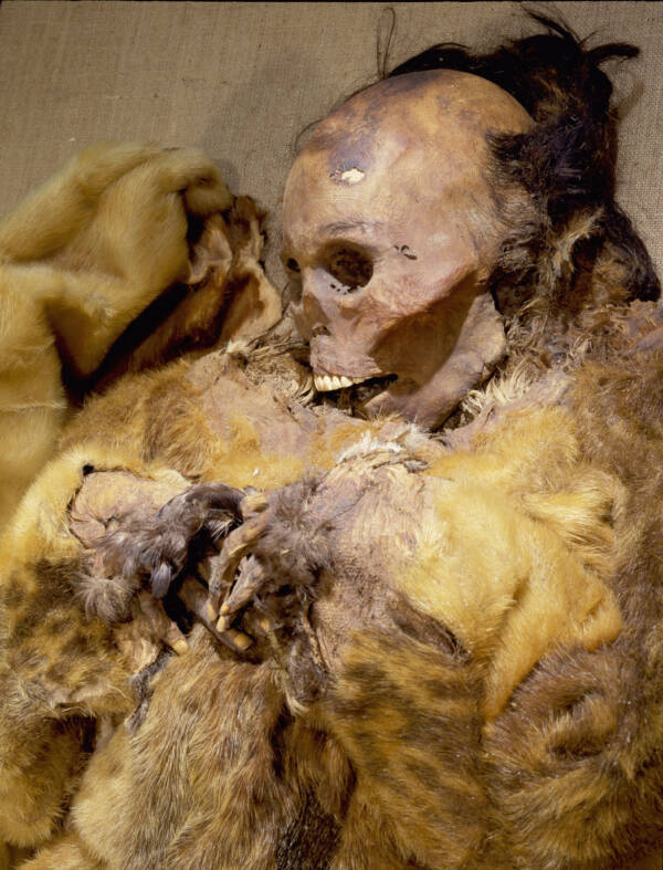 Female Qilakitsoq Mummy Wrapped In Fur