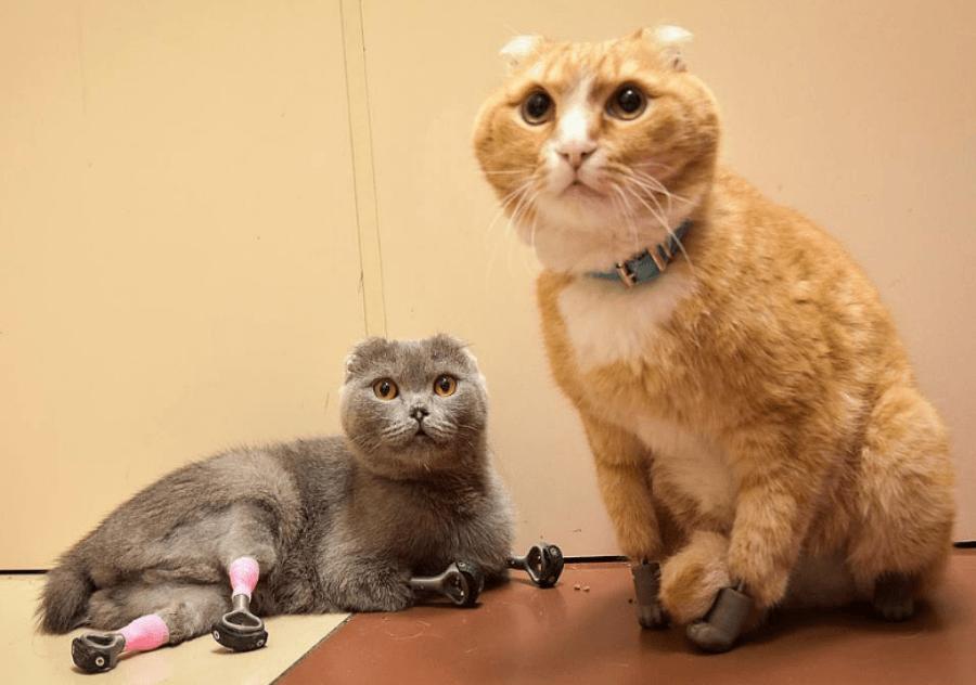 Bionic Cats