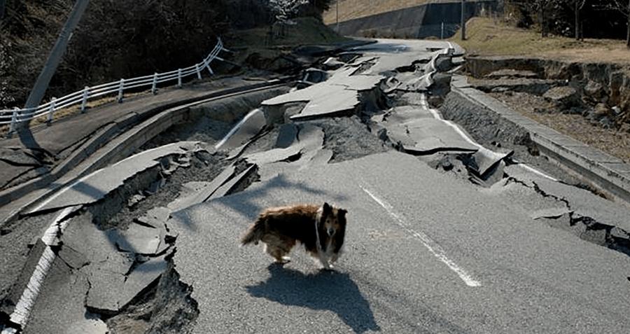 dog-near-fukushima-navigating-earthquake-damage.png