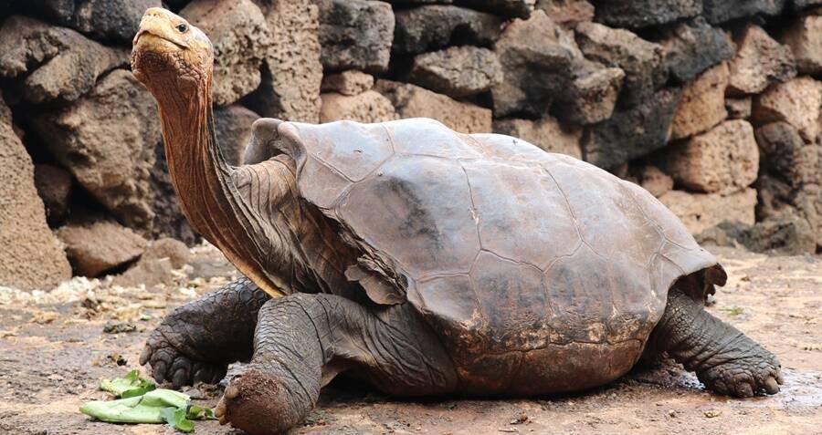 galapagos-tortoise.jpg