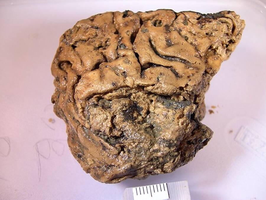 Heslington Brain