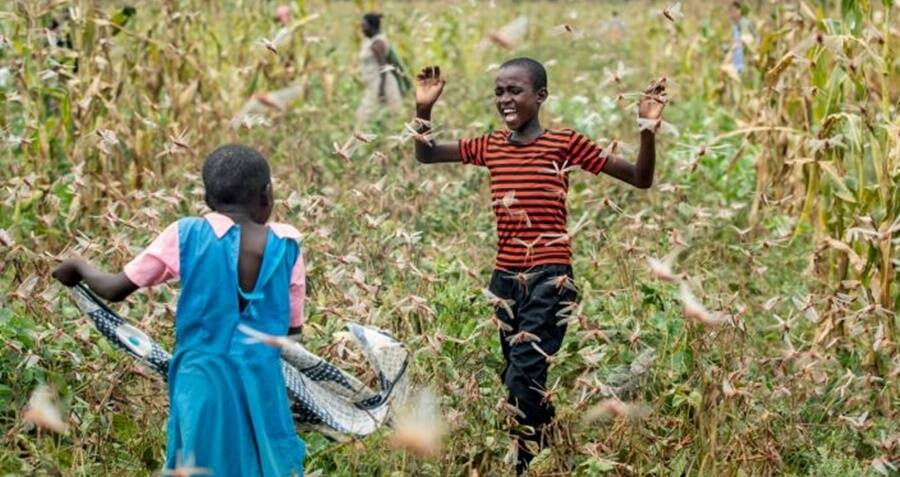 200 Billion Locusts Invade Kenya In The Worst Infestation In 70 Years